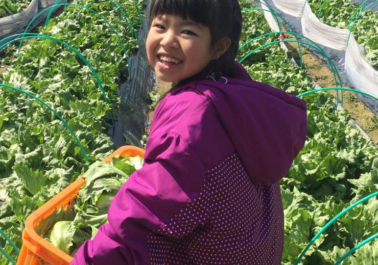 届ける:農業一筋だからこそ、野菜を届けるだけでなく、新鮮さを届けることの大切さを知っています。