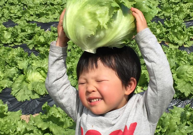 食べる:食が偏りがちな現代社会。食わず嫌いも栄養の偏りも、おいしい野菜の力で未来の健康をつないでいきます。