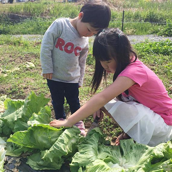 作る過程で野菜に違和感や傷みなどがないかチェックします